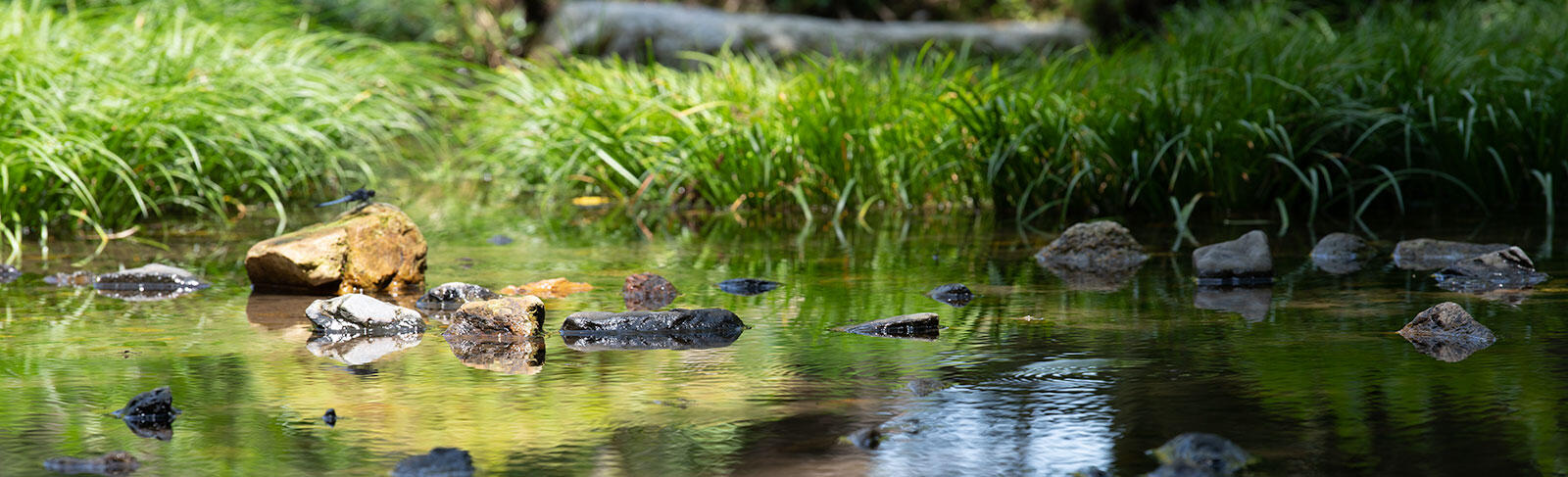 dragonfryonthestone